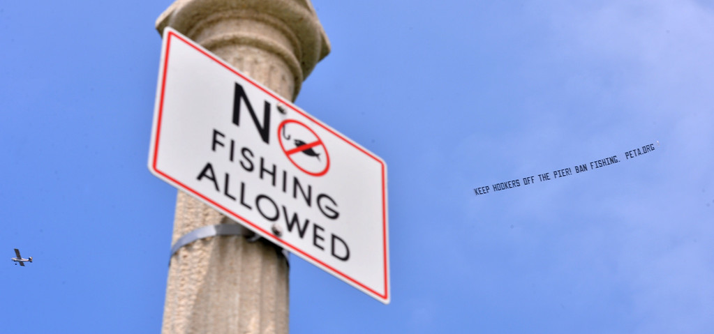 . A PETA-sponsored anti-fishing banner was flown around the Manhattan Beach Pier and up the coast Tuesday in the wake of an incident in which  a shark bit  a swimmer in the water.  The shark was attached to a fisherman\'s line when the bite occurred. Photo by Brad GraversonThe Daily Breeze/07-15-14
