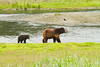 Mom and cub. Pack Creek, Alaska