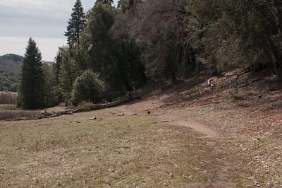 Palomar_Mountain_2012-6371