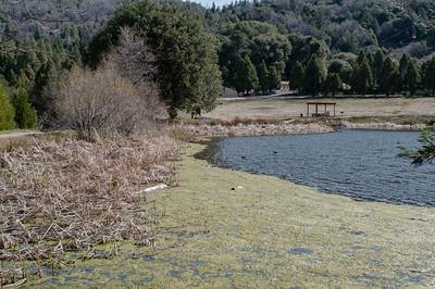 Palomar_Mountain_2012-6348