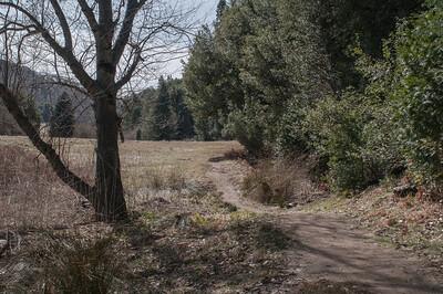 Palomar_Mountain_2012-6368