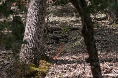 Palomar_Mountain_2012-6393