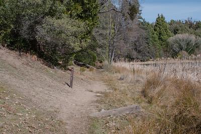 Palomar_Mountain_2012-6367