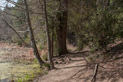 Palomar_Mountain_2012-6346