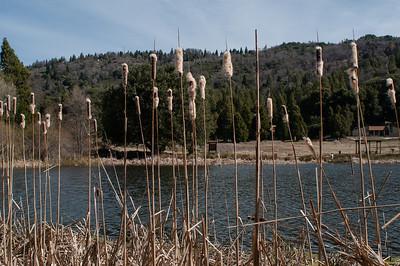 Palomar_Mountain_2012-6349