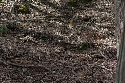 Palomar_Mountain_2012-6403
