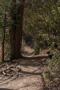 Palomar_Mountain_2012-6347