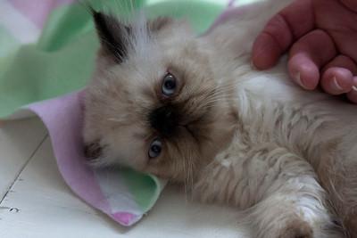 Pansy's Kittens June 28 2013