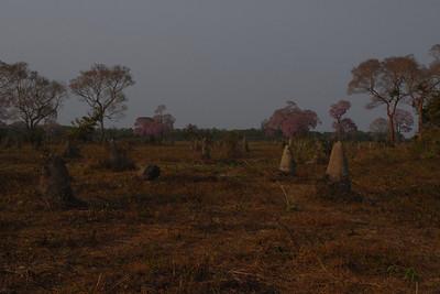 010_7713 Mato Grosso Pantanal