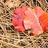 US-VA-000358.psd - Autumn Leaf Litter, Great Falls, Virginia