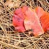 US-VA-000358.psd - Autumn Leaf Litter, Great Falls, Virginia