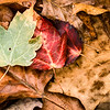 US-VA-000350.psd - Autumn Leaf Litter, Great Falls, Virginia