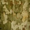 Bark Detail, Montezuma Castle National Monument, Arizona, USA