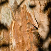 Shadow on Tree Bark, Boyce Thompson Arboretum, Superior, Arizona, USA