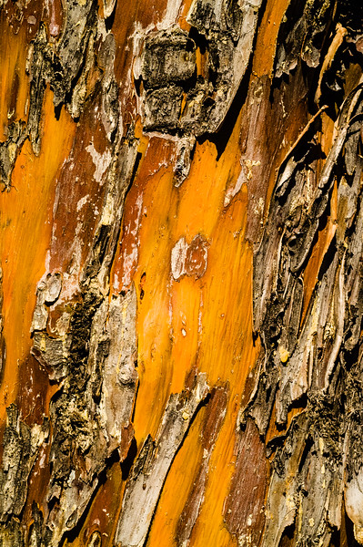Bark Detail, Tonto Natural Bridge State Park, Arizona, USA