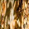 Shadow on Tree Bark, Boyce Thompson Arboretum, Superior, Arizona, USA