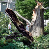 John P. Cleary | The Herald Bulletin <br /> Some of the tree damage in Falls Park from Monday's tornado.