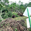 John P. Cleary | The Herald Bulletin <br /> Trees along Huntsville Road east of the sports complex were laid over by the high winds of the tornado.