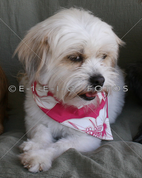 E-I-E-I-O Fotos & Portraits - Pet Photography<br /> Are you looking for a Photographer in the Taylor Texas area?<br /> E-I-E-I-O Fotos & Portraits is a mobile on-site photographer, servicing Taylor Texas and the surrounding area (Hutto, Thorndale, Thrall, Georgetown, Granger Texas)  with professional photography. Using top of the line professional equipment with years of experience. Specializing in all types of portraits; architectural, agricultural, sports and events.<br /> <br /> My photographs have been used in brochures, magazines, newspapers and websites. People enjoy my photographs from professional events to family sessions, portraits, children, pets, youth sports, architectural and candid moments.<br /> <br /> If you're looking for a photographer to photograph a professional, family, sports or a city event or you may need photos of a house, building, car, tractor, boat, jewelry or what ever it may be... I'm your photographer. I'm looking forward to hearing from you.