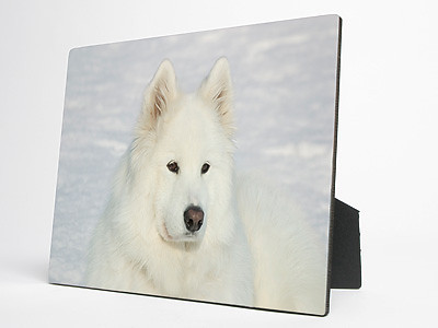"""""""Photo Panels""""<br /> <br /> Price: Shown in Cart<br /> <br /> Brilliant color reproduction on hardwood panels.<br /> <br /> Sides and back are black with easel back.<br /> <br /> Highly resistant to ultraviolet rays, scuffs, scratches, water and fading.<br /> <br /> Your photo must be at least this big:<br /> 5 x 7:     575 x 805 pixels<br /> 8 x 10:   800 x 1000 pixels"""