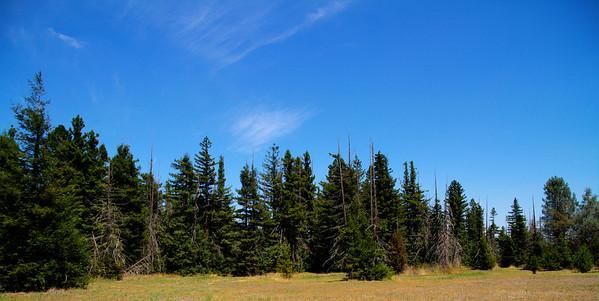Pialligo Redwood Forest, Canberra