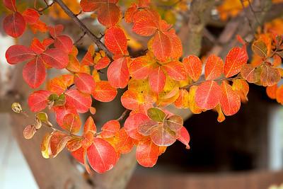 Sonoma County Fall 2013