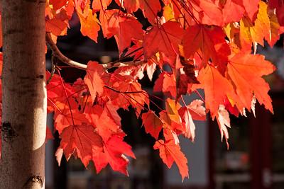 Petaluma Fall 2014