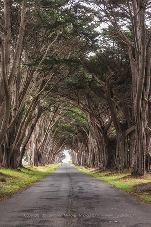Cypress Arch - Color, Vertical