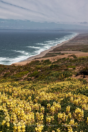 Down the Line at Point Reyes with Summer Flowers