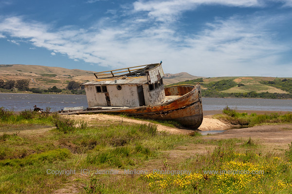 Shipwreck at Inverness with Yellow Flowers