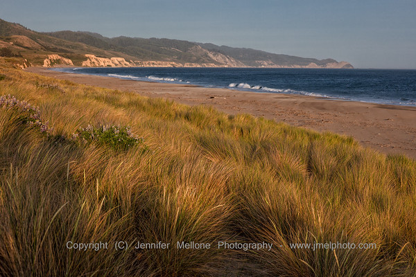 Golden Hour at Limantour Beach South