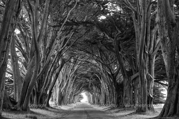 Cypress Arch Textures - Black and White, Horizontal