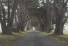 Foggy Cypress Arch - Color, Horizontal