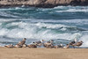 Gulls and Soft Waves at McClures Beach