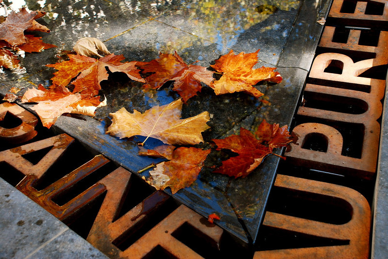Leaves in the Fountain