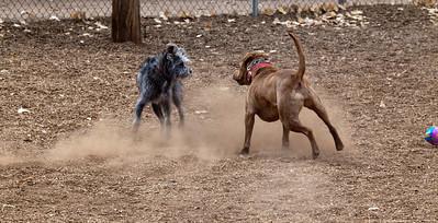 dust dogs 8443