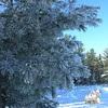Frosted White Pine.