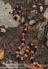 A large male Central American Coral Snake (<i>Micrurus mosquitensis</I>) from the Rara Avis Rainforest Reserve
