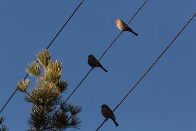 3birds C6048