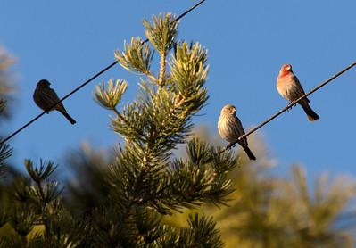 3birds C6015