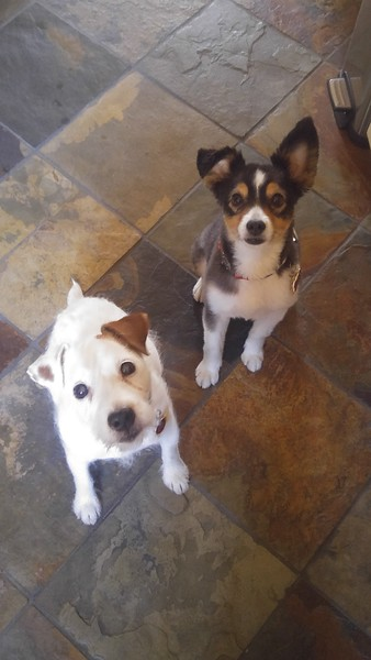 Ella & Sadie Cocke