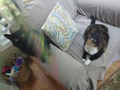 Frankie, Birdie and Lulu