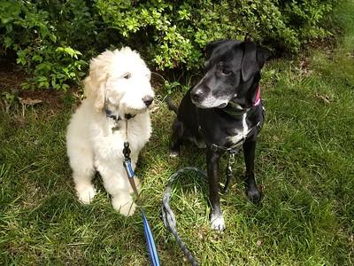 Trudy and Emmett Harvel