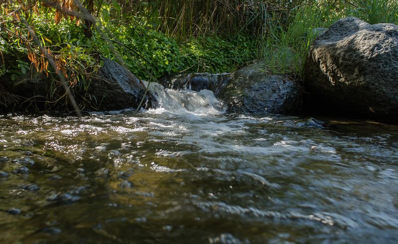 Santa Margarita River Trail-2159