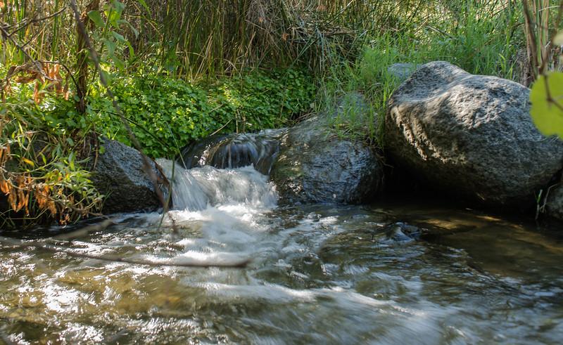 Santa Margarita River Trail-2158