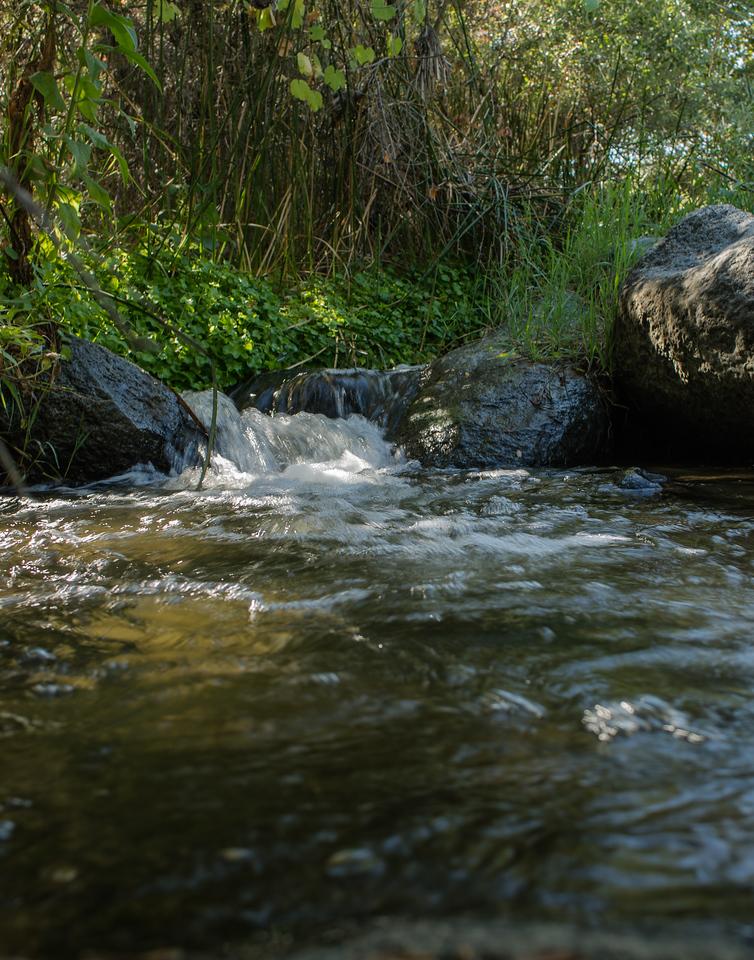 Santa Margarita River Trail-2160