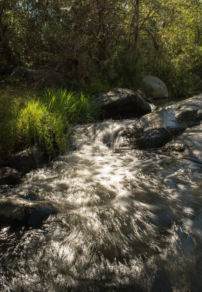Santa Margarita River Trail-2157