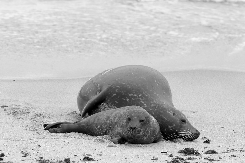 Newborn Seal #1.