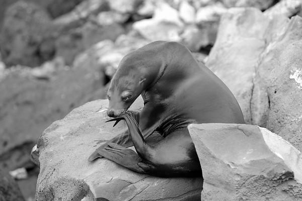 Seals-SeaLions