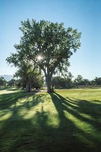 Sun Tree shadows 02783